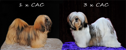 Lhasa Apso: Ariyantas Ma-Naya and Rebellic's It's All About The Money
