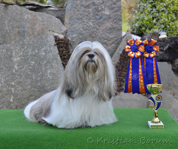 Lhasa Apso: Rebellic's It's All About The Money